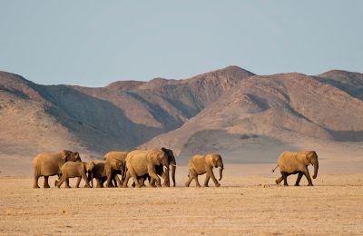Ναμίμπια: Έρημος και ρινόκεροι