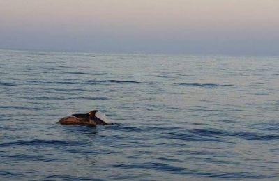 Όμορφες εικόνες με δελφίνια στο Μακένζι
