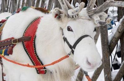 Σε δημοπρασία δύο κούκλες από τη χριστουγεννιάτικη ταινία 'Rudolf the Red-Nosed Reindeer'