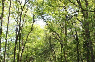 7 εύκολα μονοπάτια για πεζοπορία στην φύση
