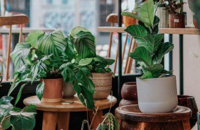 Πώς να μην σκοτώσεις τα φυτά σου το φθινόπωρο